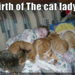 Don't be the awkward cat lady.