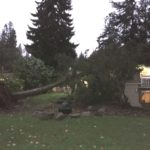 A tree fell on our house.