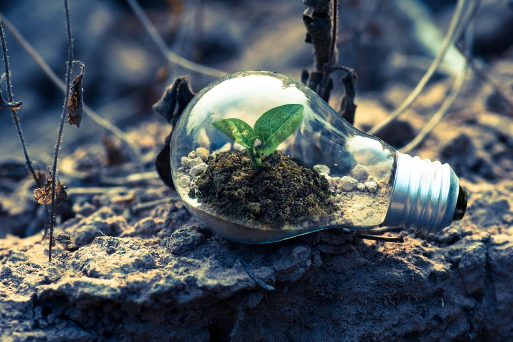 Photo of a lightbulb with an ecosystem inside
