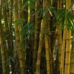 Save and Make Money with . . . Bamboo?